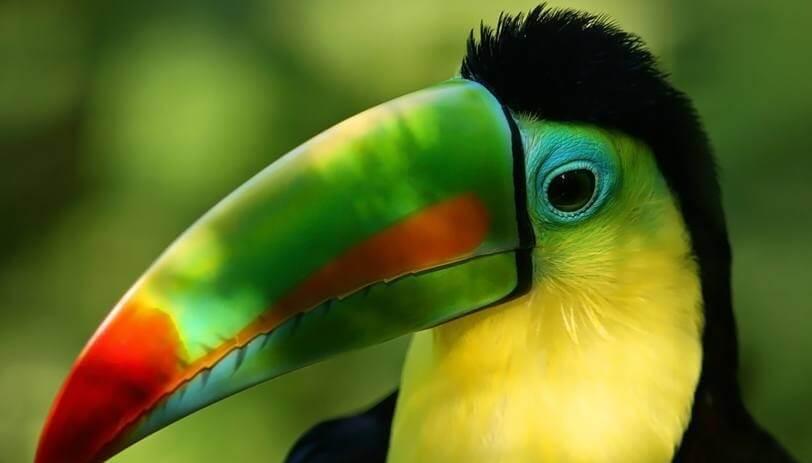 Costa-Rica-toucan-e1456219911283