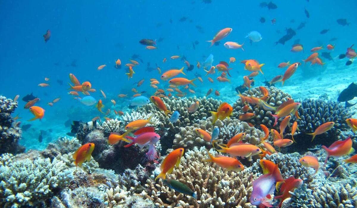 Republique-Dominicaine-poissons-e1456748950368-1