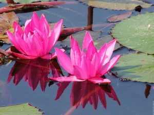 magnifique thailande 10 1600x1200