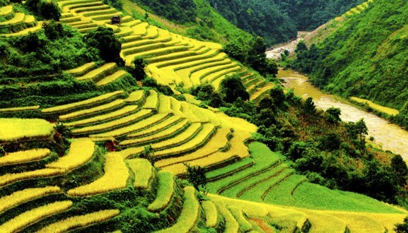 Thailande-rizieres-e1456755921713-1