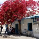 Tunisie Houmt-Souk